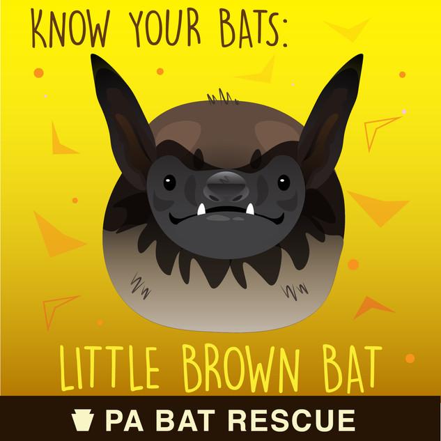 Bat-Detail-pa_Little Brown Bat.jpg