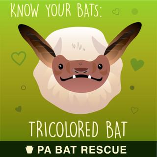 Bat-Detail-pa_Tricolored Bat.jpg