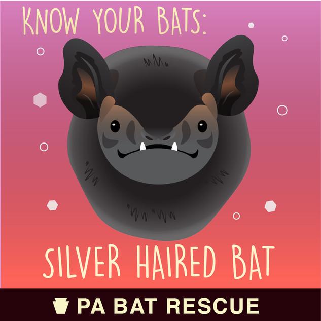 Bat-Detail_Silver Haired Bat.jpg