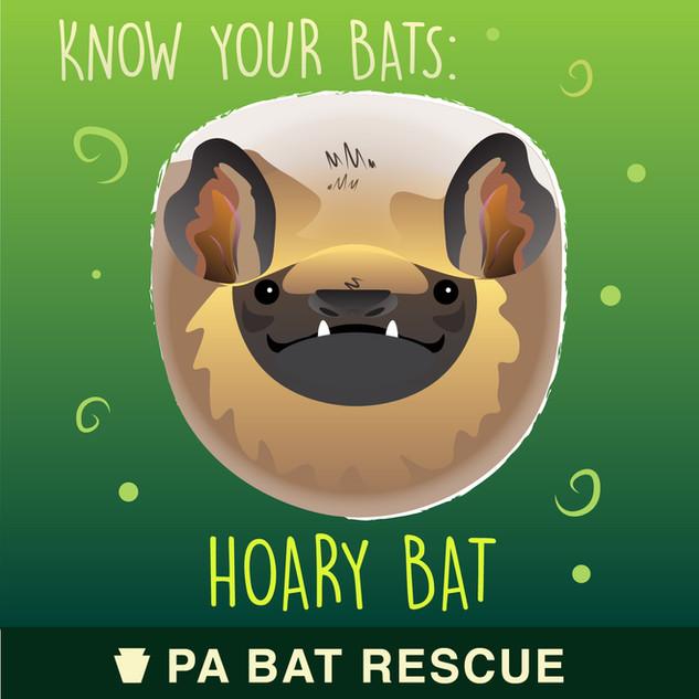Bat-Detail_Hoary Bat.jpg