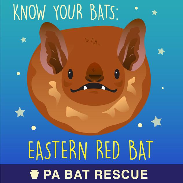 Bat-Detail_Eastern Red Bat.jpg