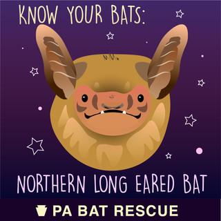 Bat-Detail_Northern Long Eared Bat.jpg