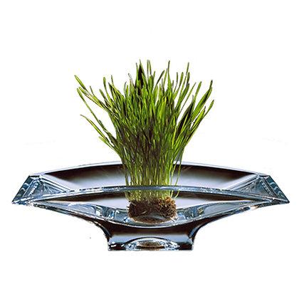 """Crystal Planar Bowl - 14"""""""