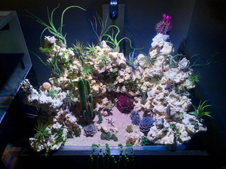 Our Planted Reef Display