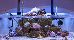 Salty Blues 45g Lagoon Display