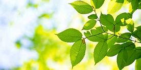tree-id.jpg