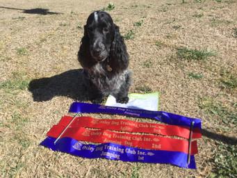 Jaxon & his ribbons