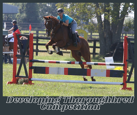 Developing Thoroughbred Competition