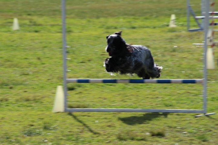 Fleur in excellent jumping
