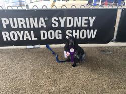 royal show 1