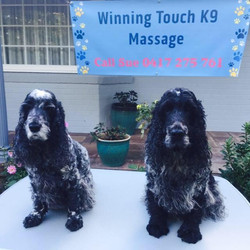 two doggies