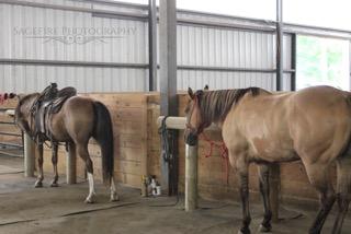Horses tied
