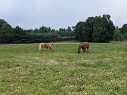 Facility- Pasture