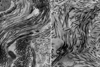 Deb-Cell-paper-comparison.jpg