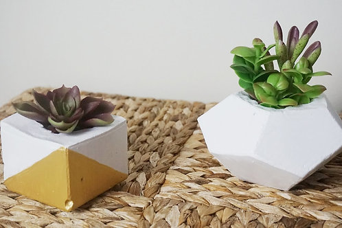 Paint your Concrete Pot/Succulent Class