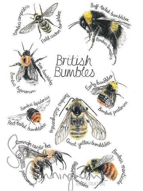 British Bumbles Art Print