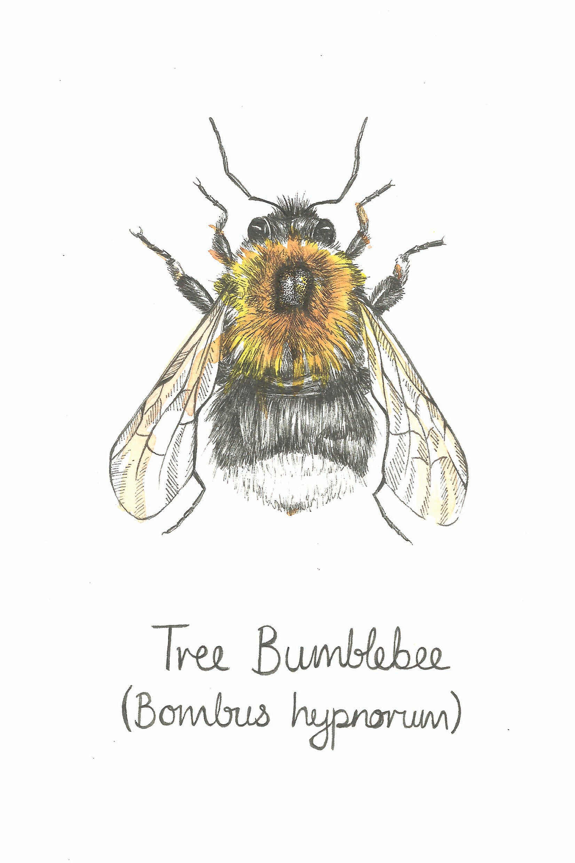 sophie cunningham illustrator tree bumblebee print