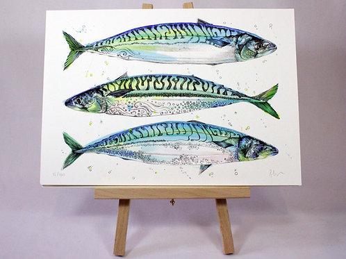 Triple Fish Limited Edition Fine Art Print