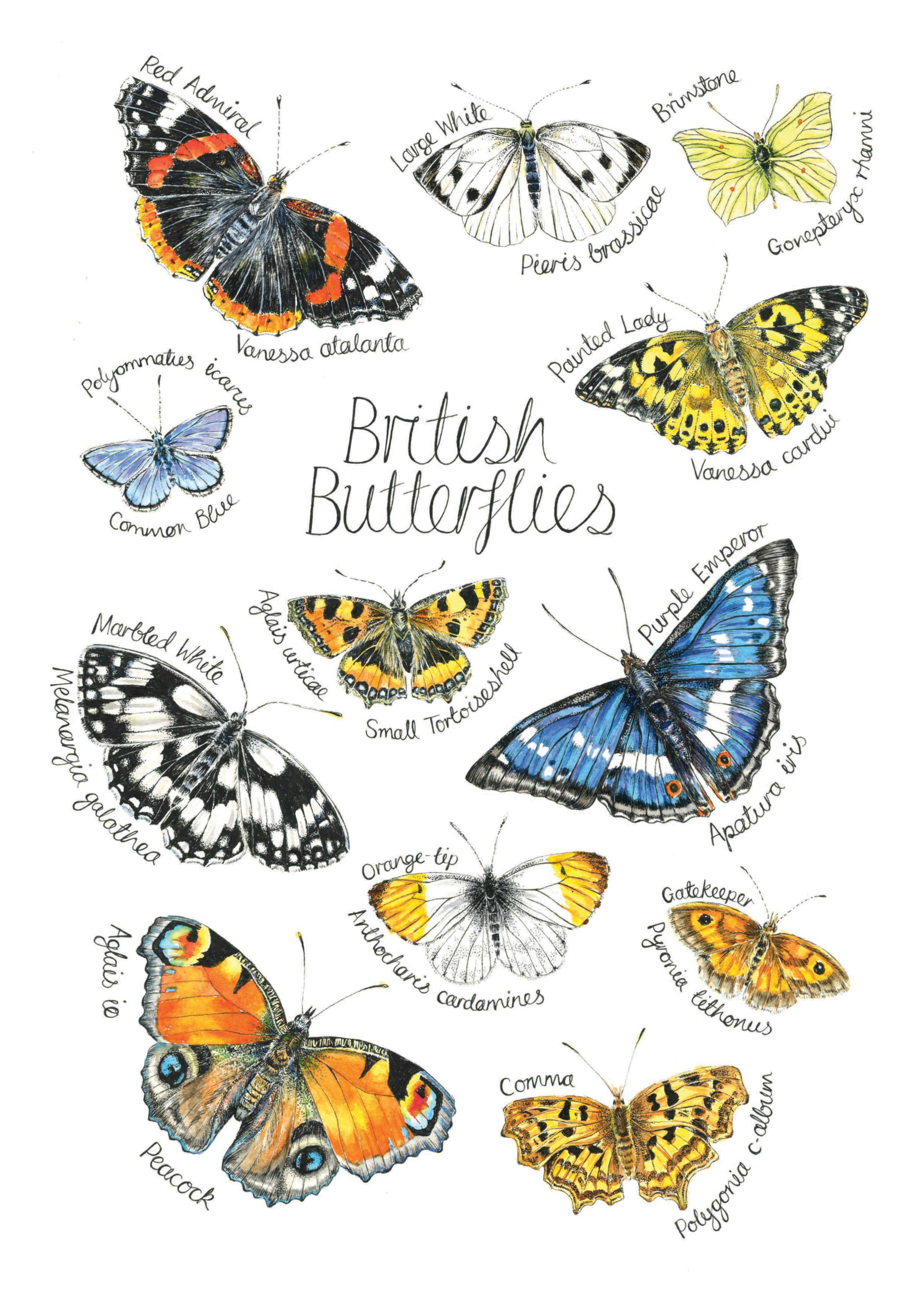 British%20Butterflies%20web_edited