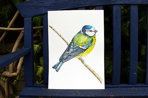 PRBLUTA5/A4/A3 Bluetit Fine Art Print