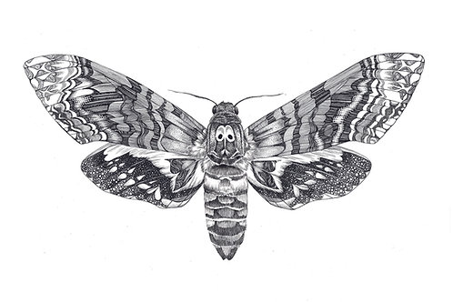 Moth Art Print PRMOTHA4/A3