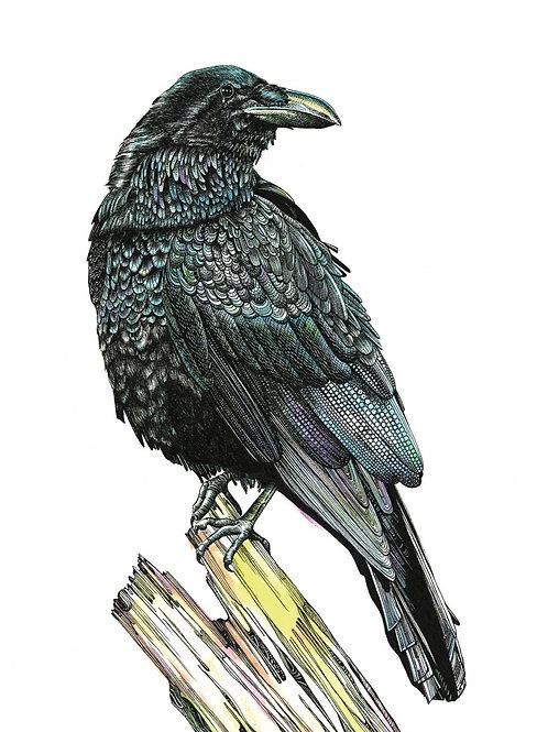 Raven Original Art A3