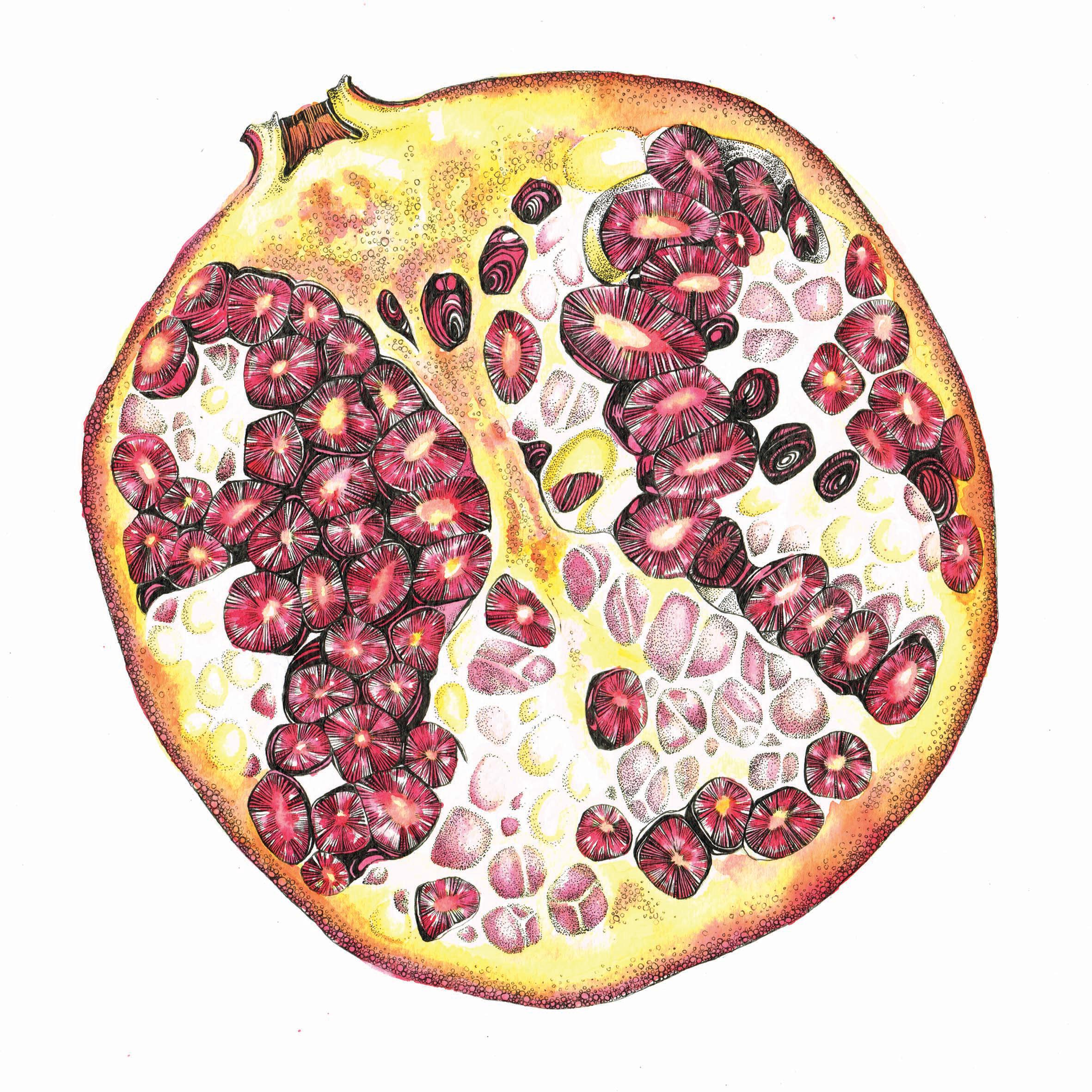 pomegranate 20cm x 20cm