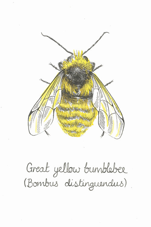 Great Yellow Bumblebee Print