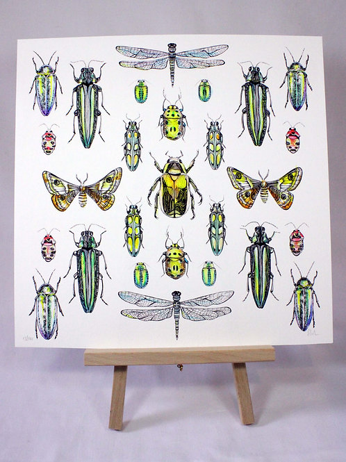 Insects Limited Edition Fine Art Print