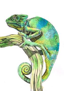 portrait chameleon printers
