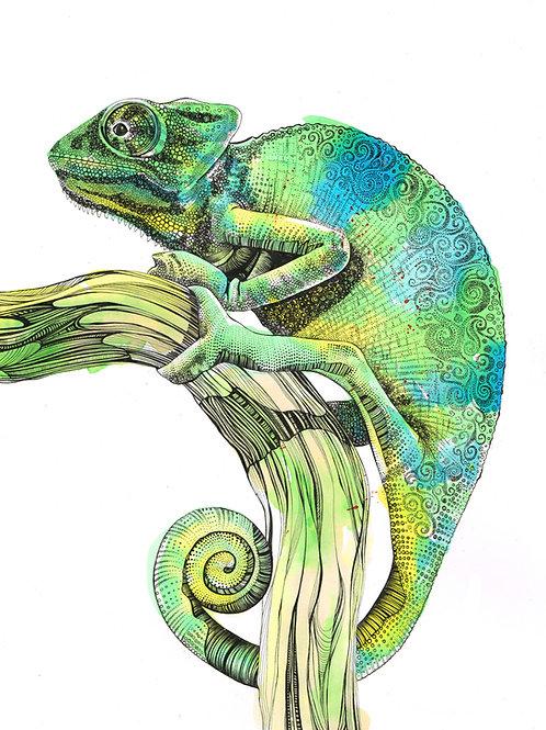 PRCHAM/A4/A3 Chameleon Fine Art Print