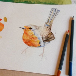 On a Friday birdy roll! #illustration #p