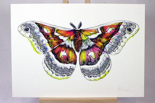 Jazz Moth Fine Art Print