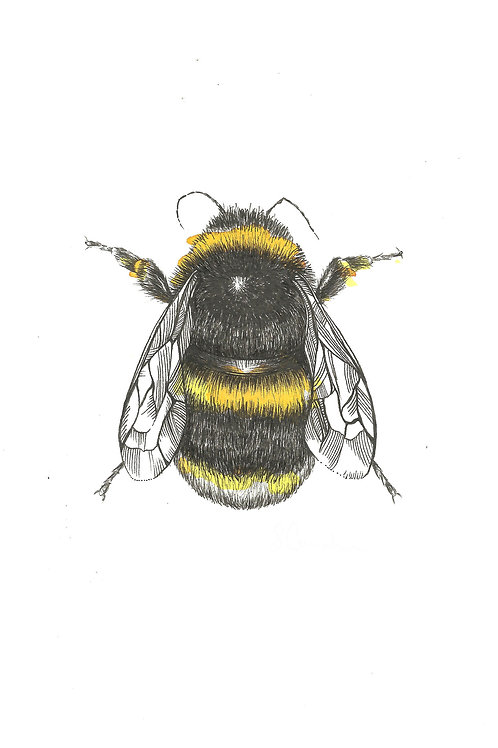 PRBB Bumblebee Print
