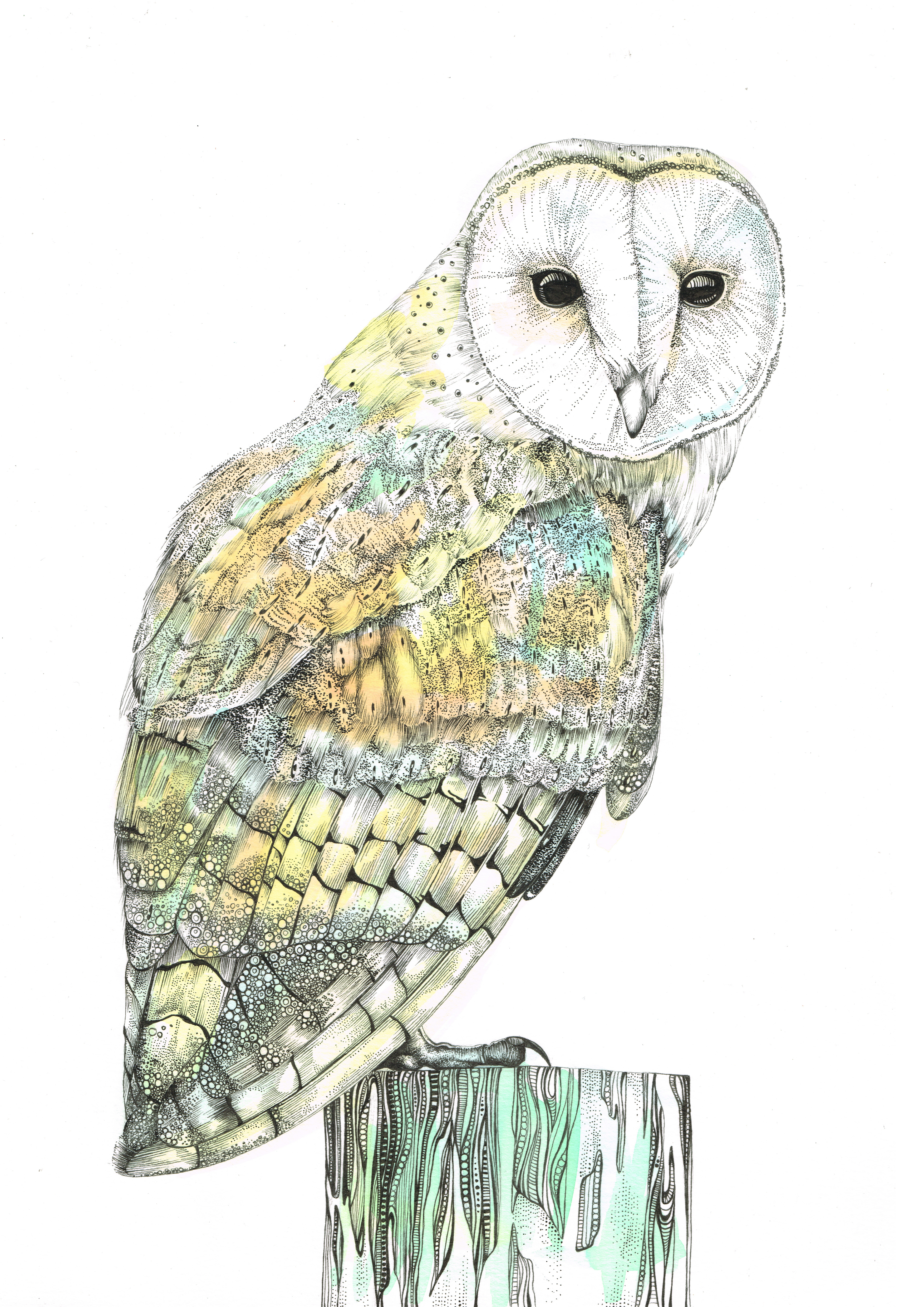 barn owl to print