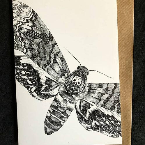 Moth Cards Code 031