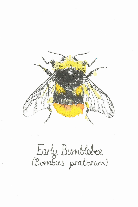 sophie cunningham illustrator early bumble bee original art