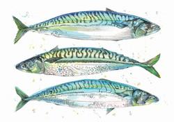 triple fish a4