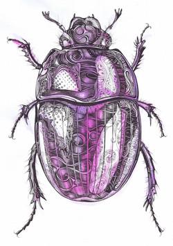 Psychedelic Beetle
