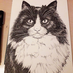 Recently finished pen cat portrait done