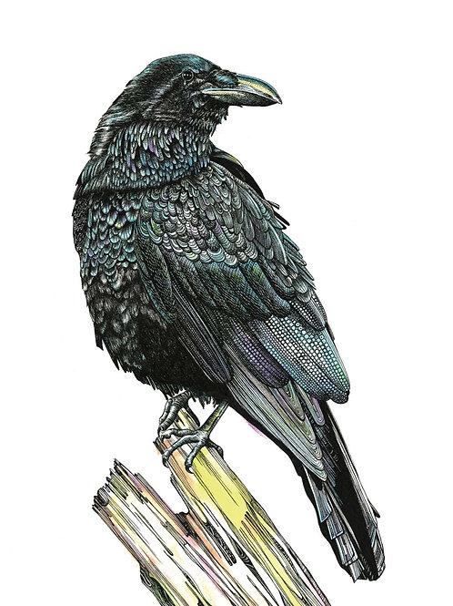 Raven Art Print PRRAVEA4/A3