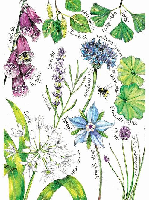 PRHERBA4/A3 Herb Garden Fine Art Print