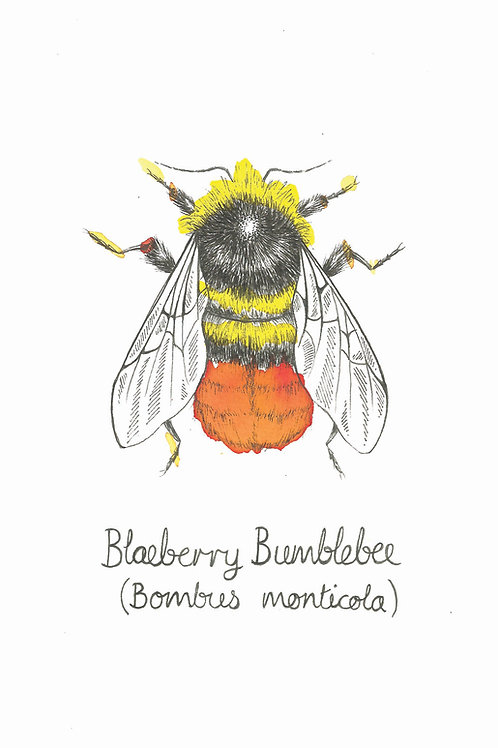 Blaeberry Bumblebee Original Art