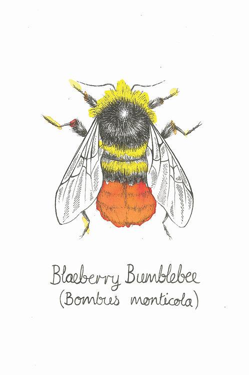 Blaeberry Bumblebee