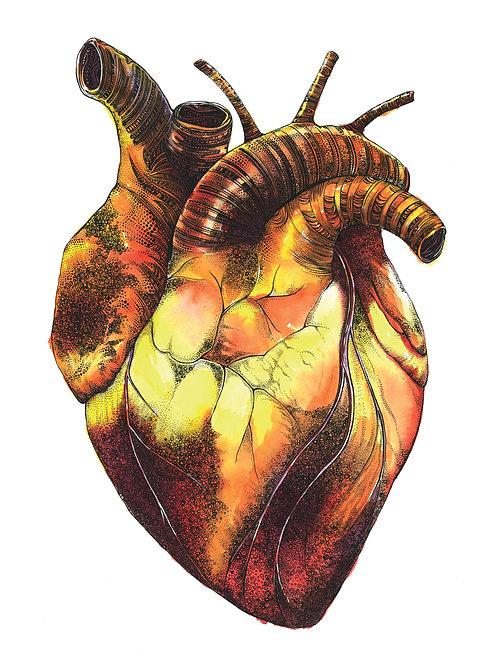 Human Heart Art Print PRHUMA4/A3