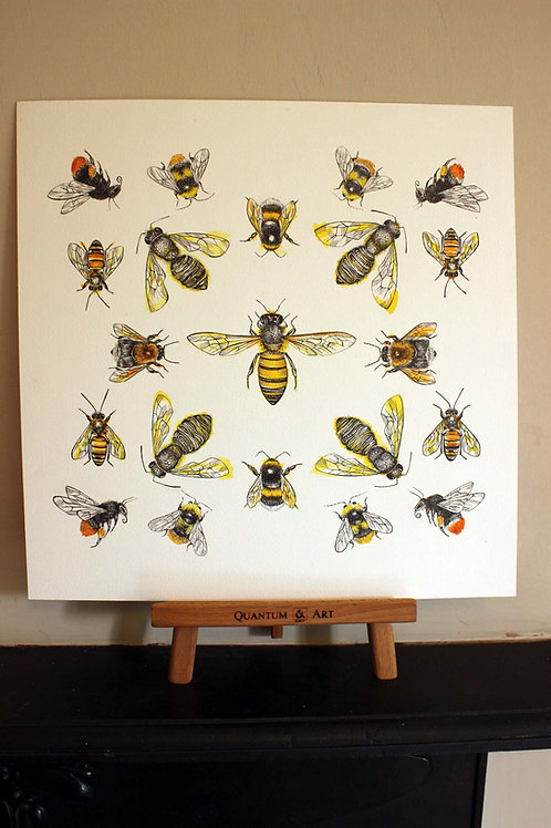 Bee Species Original Art