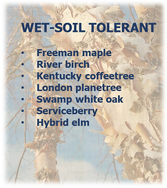 wet soil tolerant.png