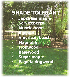 Shade tolerant graphic.png