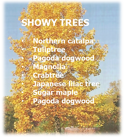 showy trees.png