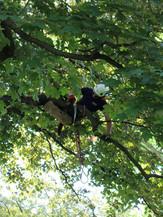 Cam in tree pruning cropped.jpg